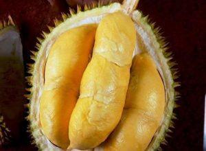 durian montong monthong