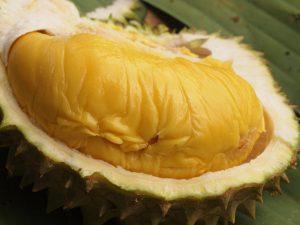 jenis durian musang king